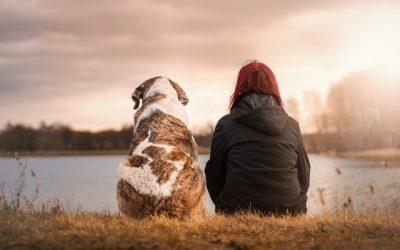 Comment choisir un animal de compagnie pour son enfant?